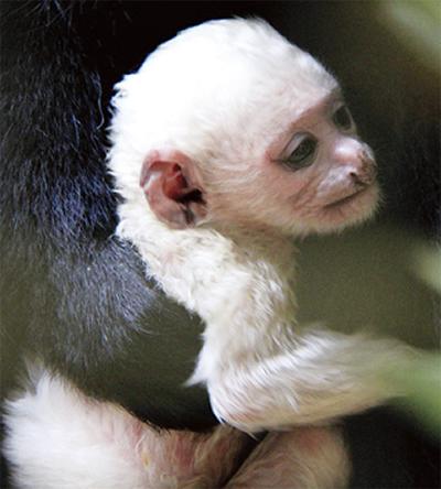 真っ白な赤ちゃん
