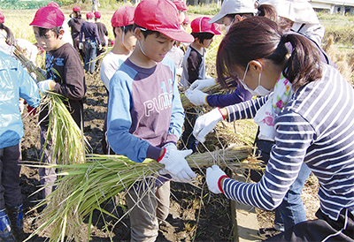 稲作の集大成「実りに感謝」