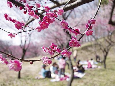 春を彩る「梅まつり」