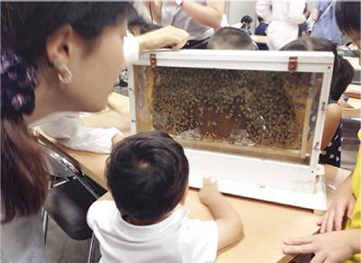 親子で蜜蜂の生態学ぼう