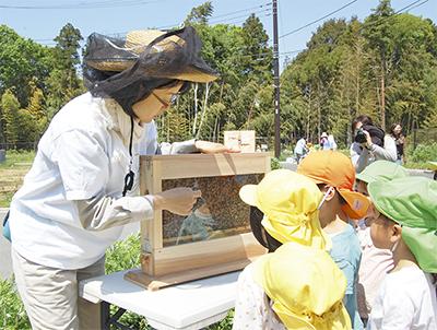 園児が蜜蜂の生態学ぶ
