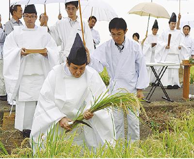 「抜穂祭(ぬいぼさい)」で豊作祝う