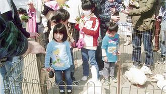 子どもが動物と触れ合った