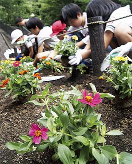 スコップ片手に、花植えに集中する児童たち