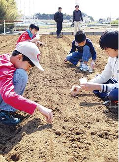 種を植える青葉区つつじが丘小の子どもたち