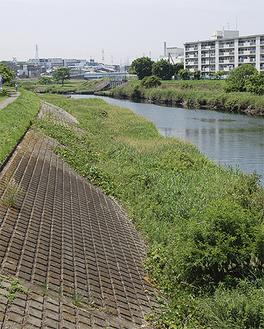 作業が完了した矢上川の堤防