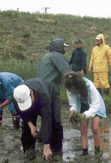 稲を植える参加者ら