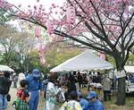 会場入口には八重桜が咲いた