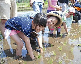 手も足も泥だらけになりながら、田植えを楽しむ子どもたち