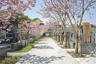 春には参道に八重桜が咲き誇る