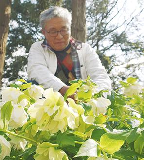 花を手入れする中村代表