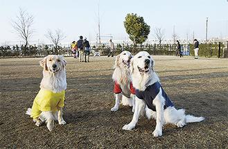 仲良しの3匹は、右からどっぴーくん、ボンヌちゃん、ジョイくん。市外から遊びに来ていた