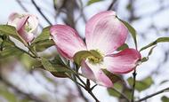 港北の木 咲き誇る