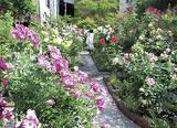 初夏の庭を楽しむ