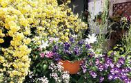 花と緑で地域交流