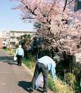 早渕川周辺の清掃活動を