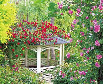 バラと緑が調和する園内
