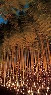 幻想的な竹灯籠まつり