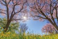沿線の桜スポット紹介