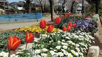 昨年の予定会場、新吉田第一公園「楽しみな花壇」