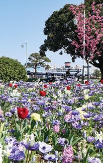 春の花が咲く山下公園