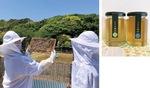 (写真左)養蜂の作業を行うメンバー(右)春に採れたハチミツ=提供