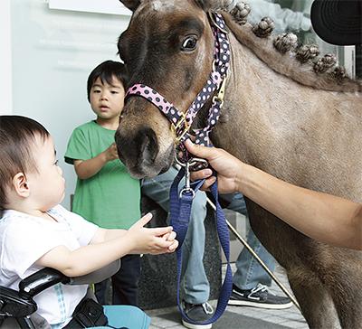「馬」の魅力に触れる
