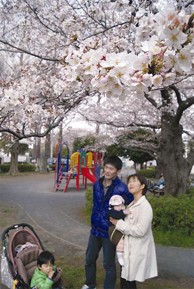 待ちに待った桜満開