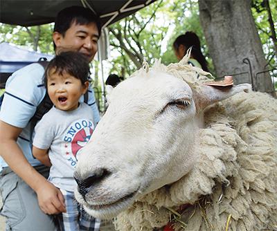 綱島に動物園が出現