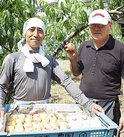 桃の収穫始まる