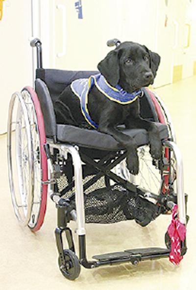 未来の介助犬 飼育