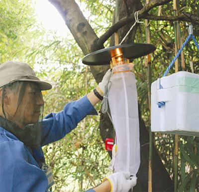 大倉山公園で蚊を採取