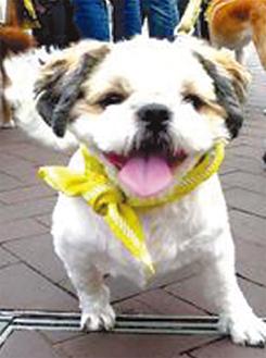 愛犬にバンダナをつけて広報