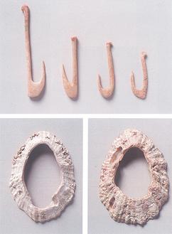 間口洞穴から出土した釣針(上)と、大浦山洞穴出土(左)、雨崎洞穴出土のオオツタノハ製貝輪*全て三浦市。縄文時代の釣針は鹿角の形状を活かした丸みを持つものが多いが、弥生時代の釣針は直線的な形態のものが多い。オオツタノハは岩場に生息するカサガイ科の貝