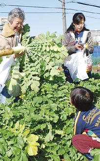 収穫体験する参加者ら