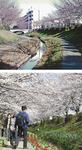 18年前の江川(上)と、現在の江川(2014年撮影)