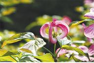「花」テーマの写真展