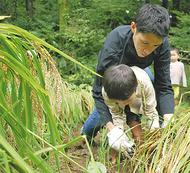 里山で稲刈り体験