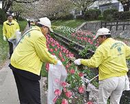 花咲く江川を清掃