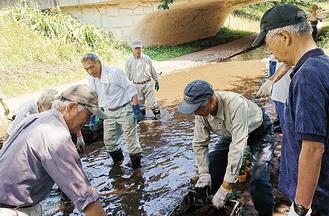 川に入っての植栽作業