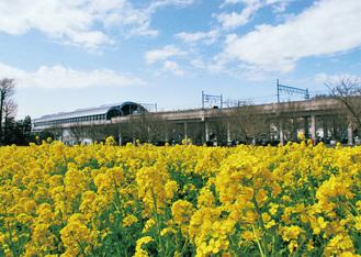市営地下鉄グリーンライン川和町駅前に広がる菜の花畑=2月21日撮影