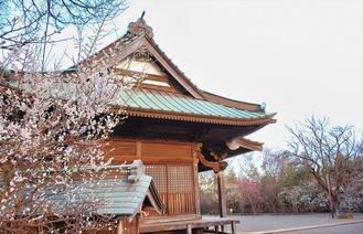 本堂に咲く白梅=2月12日撮影