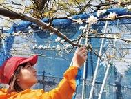 白い花に豊作の願い込め
