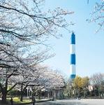 資源循環局の青白煙突と桜のコラボ