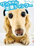 「大型犬、シニア犬も大歓迎!」