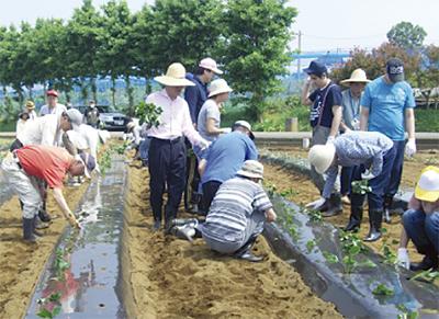 福祉農園で苗植え