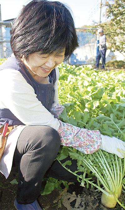 冬野菜が最盛期