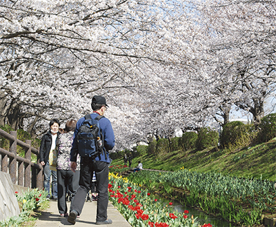 桜のトンネルににぎわい