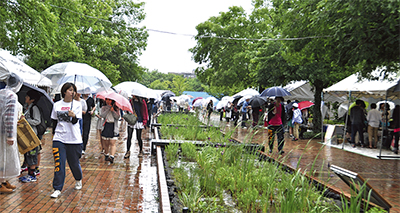 傘の花咲く横浜祭