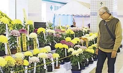 駅を彩る菊の花